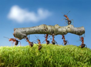 Ant Removal--Pest Control Bedford