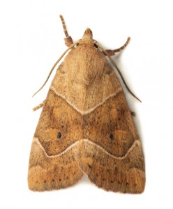 Moth Removal-[keyword strong=false link=false]