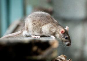 Pest control Bedfordshire