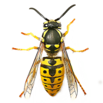 Wasp control bedfordshire